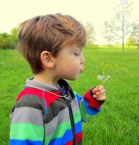 blow dandelion2