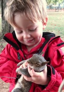 Cuddle squirrel