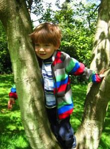 Felix tree2
