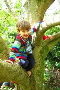 Felix tree4